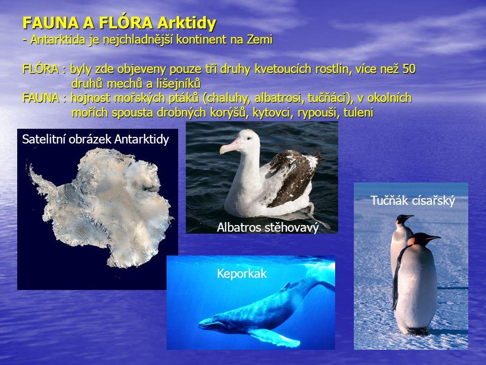 FAUNA A FLÓRA Arktidy - Antarktida je nejchladnější kontinent na Zemi FLÓRA : byly zde objeveny pouze tři druhy kvetoucích rostlin, více než 50 druhů mechů a lišejníků FAUNA : hojnost mořských ptáků (chaluhy, albatrosi, tučňáci), v okolních mořích spousta drobných korýšů, kytovci, rypouši, tuleni