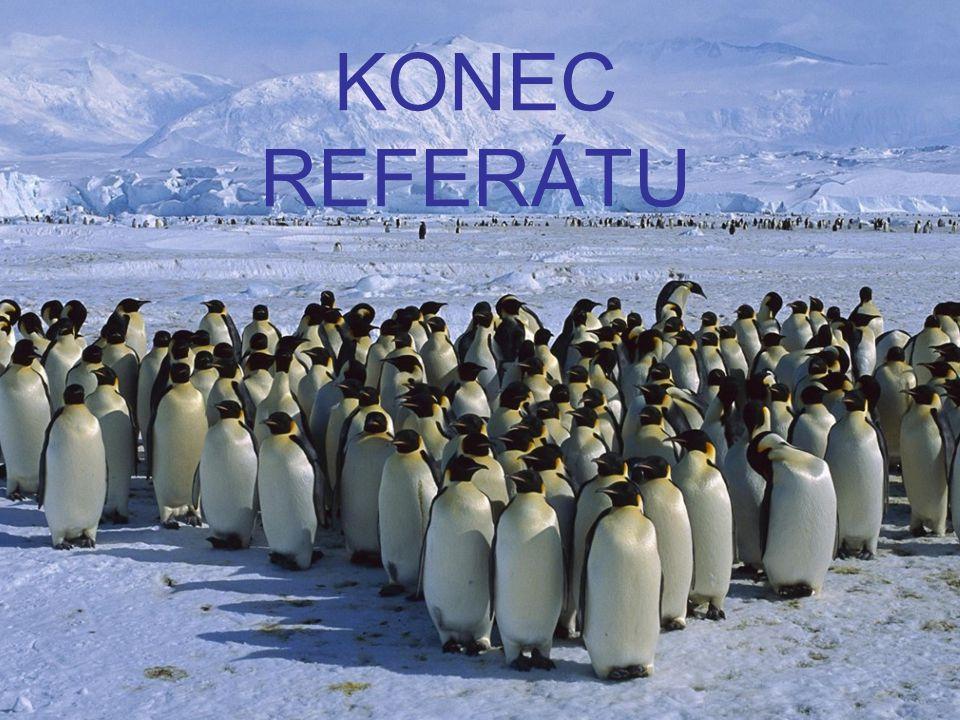 KONEC REFERÁTU