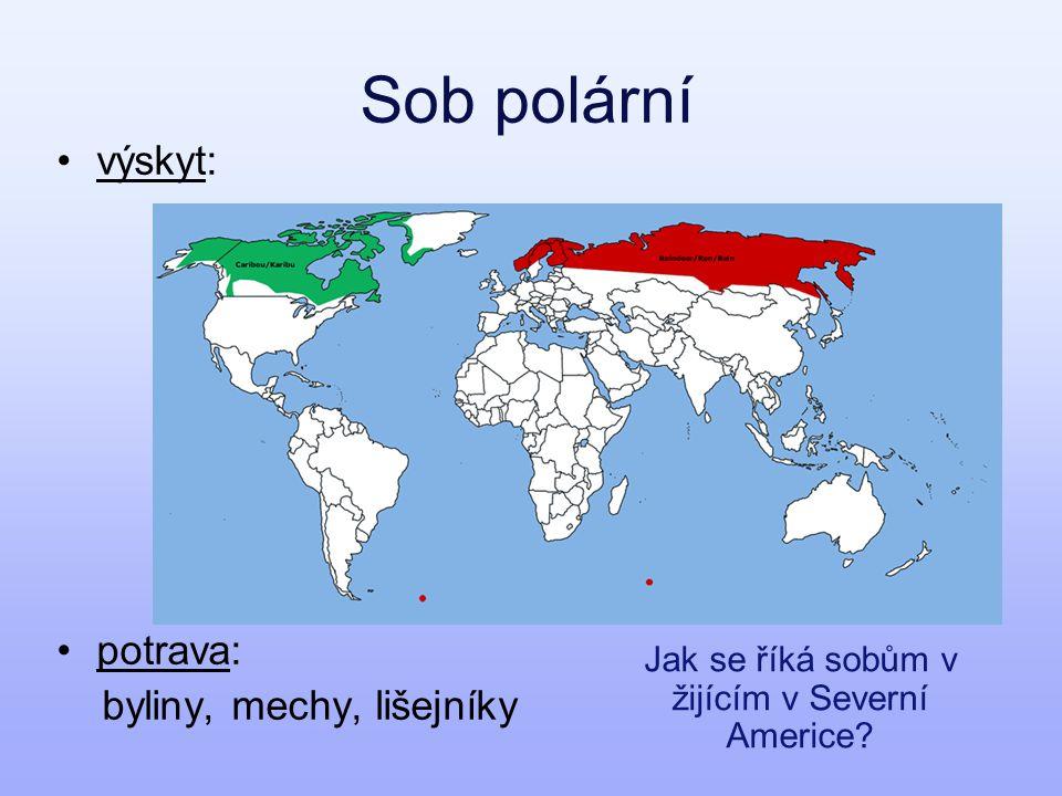 Jak se říká sobům v žijícím v Severní Americe