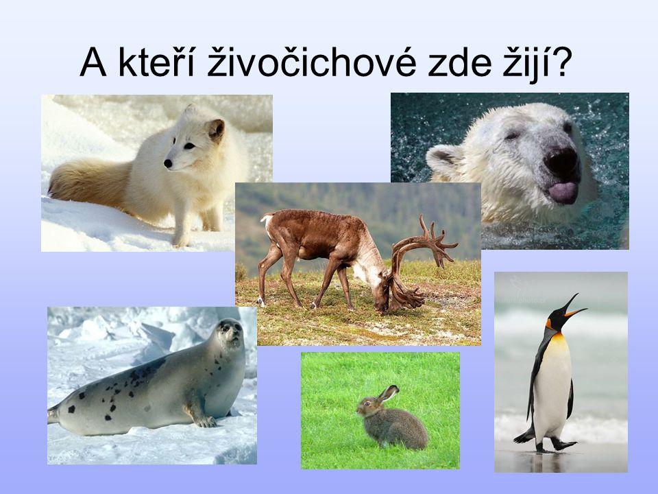 A kteří živočichové zde žijí