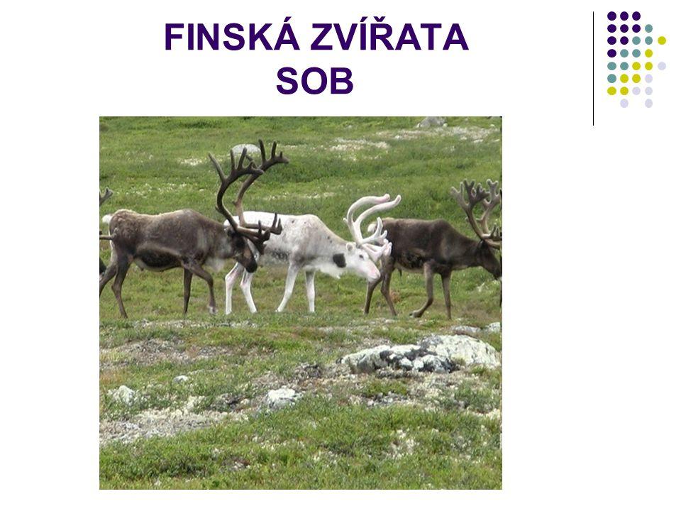 FINSKÁ ZVÍŘATA SOB