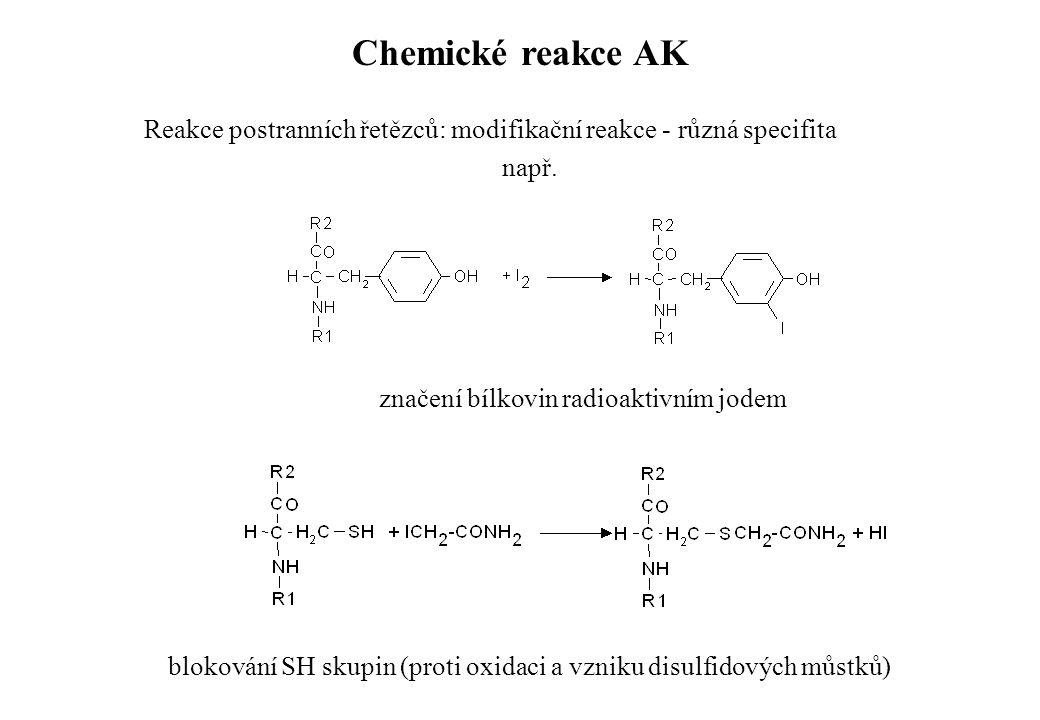 Chemické reakce AK Reakce postranních řetězců: modifikační reakce - různá specifita. např. značení bílkovin radioaktivním jodem.