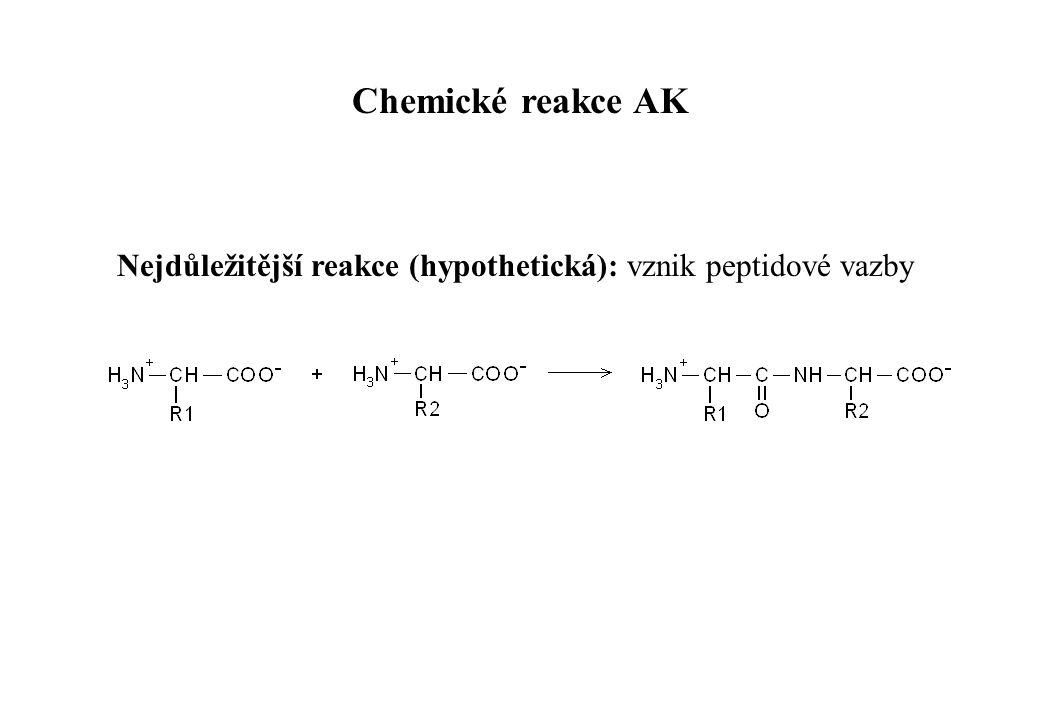 Nejdůležitější reakce (hypothetická): vznik peptidové vazby