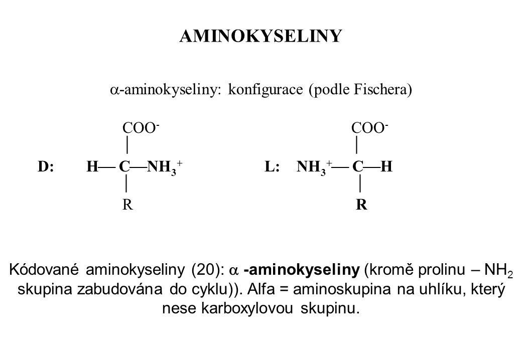-aminokyseliny: konfigurace (podle Fischera)