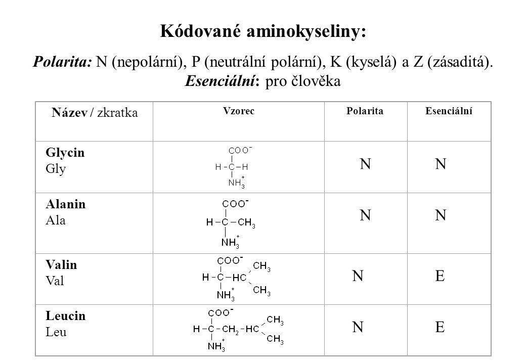 Kódované aminokyseliny:
