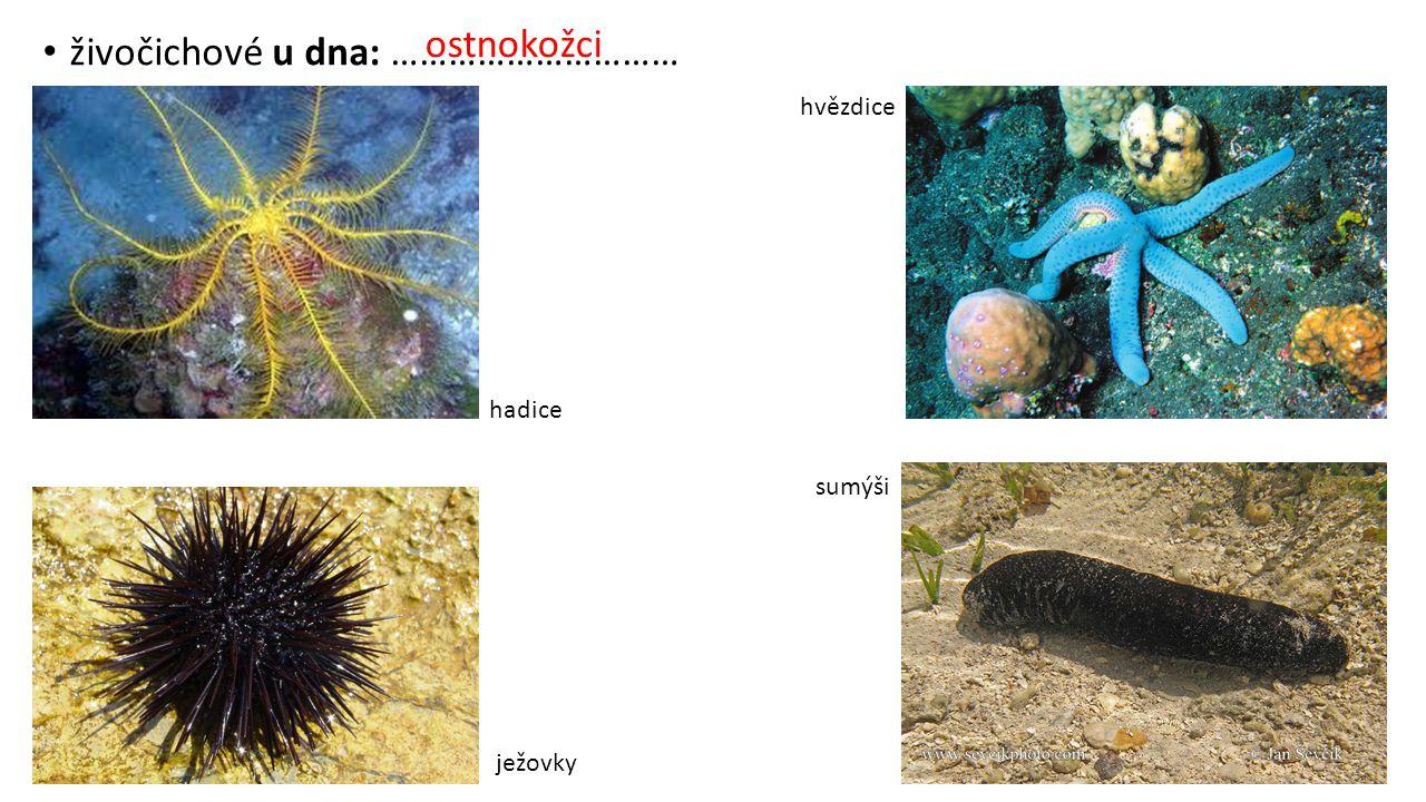 živočichové u dna: …………………………