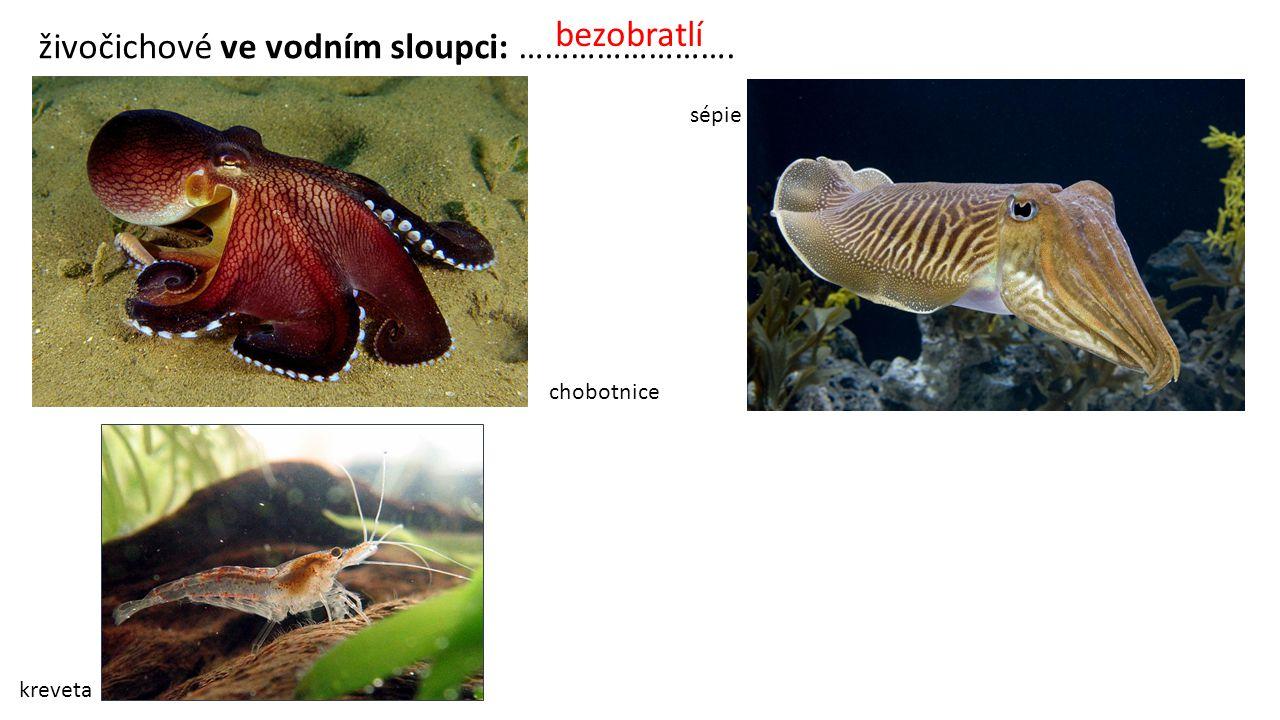 živočichové ve vodním sloupci: …………………….
