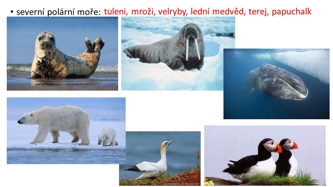 tuleni, mroži, velryby, lední medvěd, terej, papuchalk