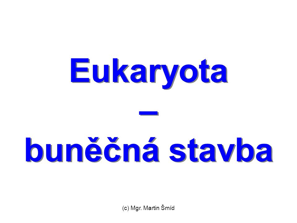 Eukaryota – buněčná stavba
