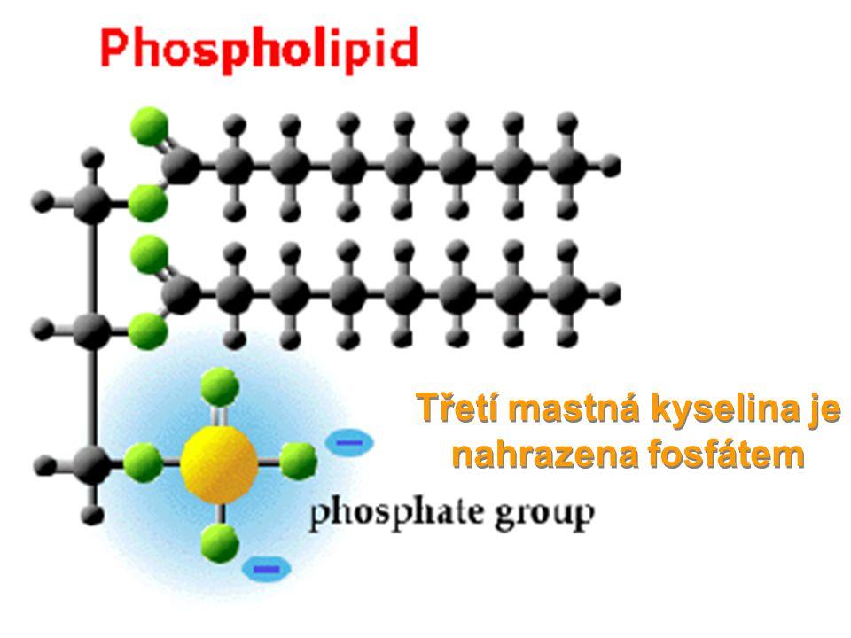 Třetí mastná kyselina je nahrazena fosfátem