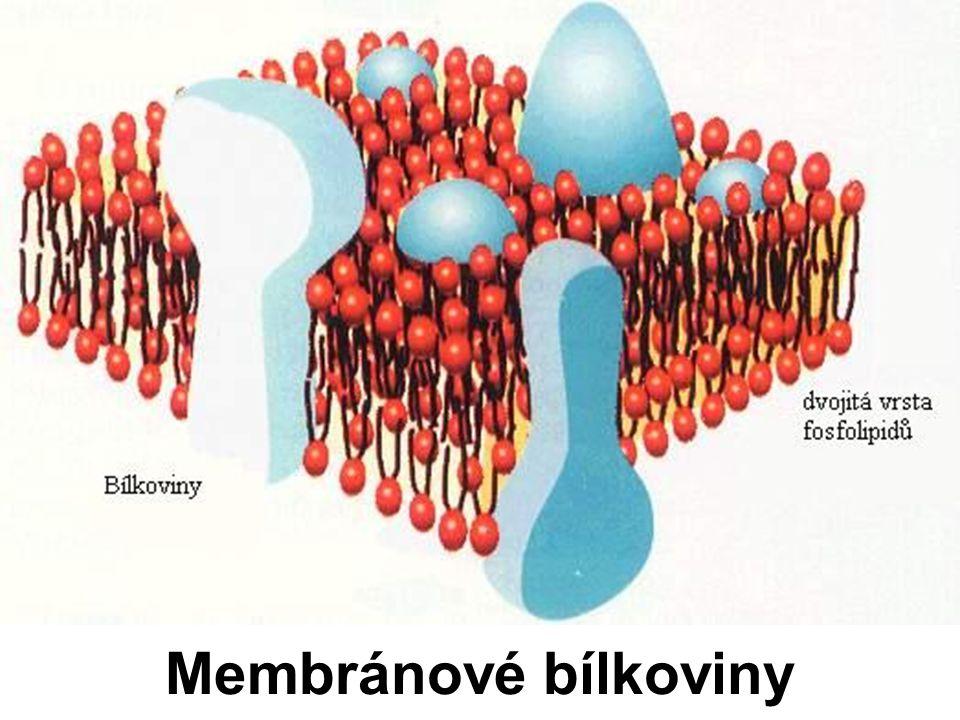 Membránové bílkoviny