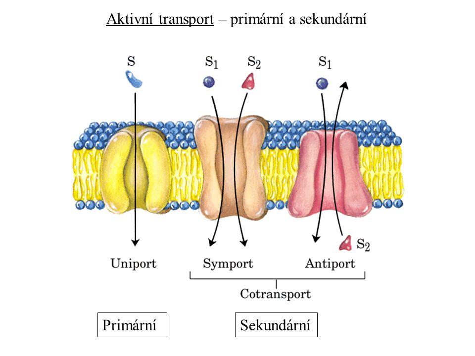 Aktivní transport – primární a sekundární