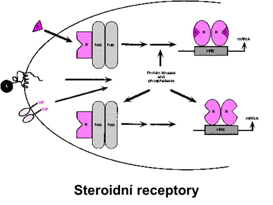 Steroidní receptory