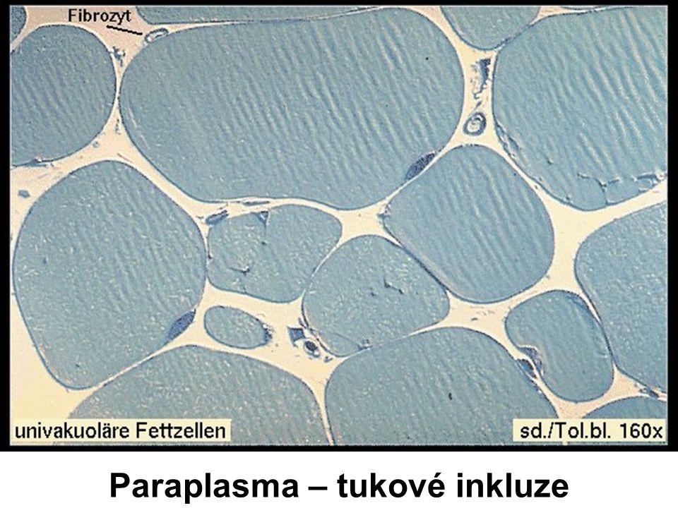 Paraplasma – tukové inkluze