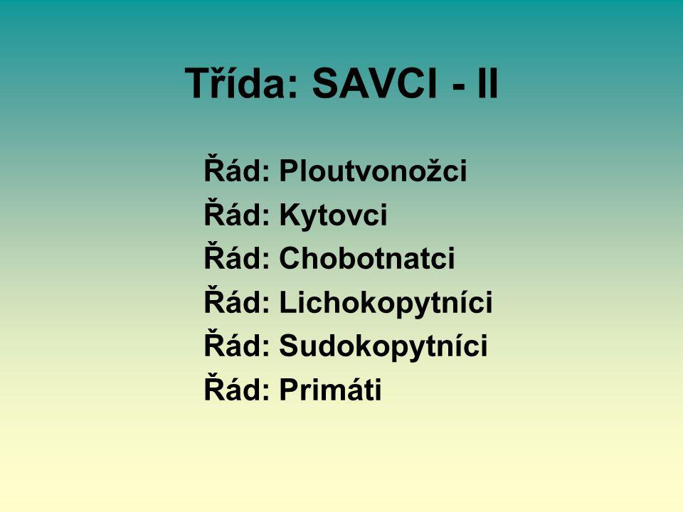 Třída: SAVCI - II Řád: Ploutvonožci Řád: Kytovci Řád: Chobotnatci