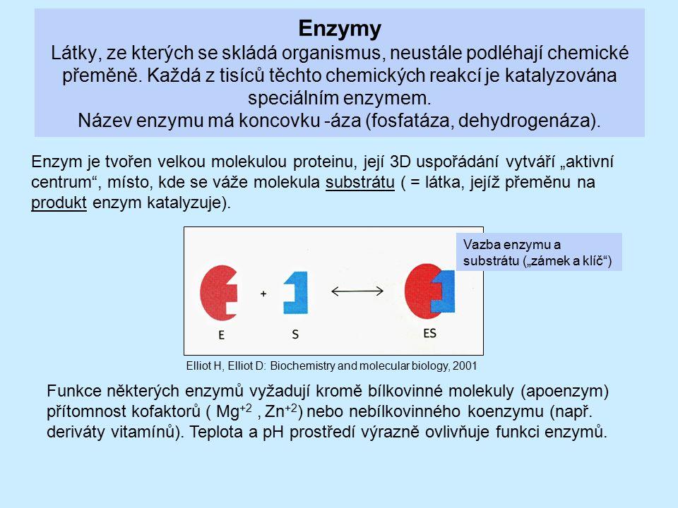 Enzymy Látky, ze kterých se skládá organismus, neustále podléhají chemické přeměně. Každá z tisíců těchto chemických reakcí je katalyzována speciálním enzymem. Název enzymu má koncovku -áza (fosfatáza, dehydrogenáza).