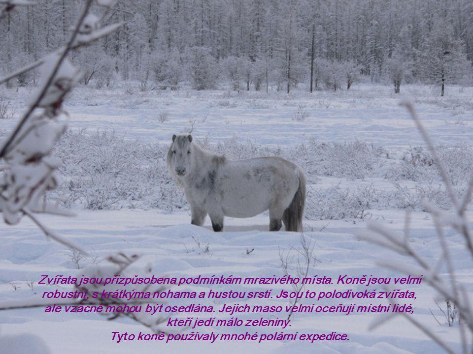 Zvířata jsou přizpůsobena podmínkám mrazivého místa