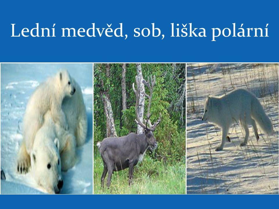 Lední medvěd, sob, liška polární