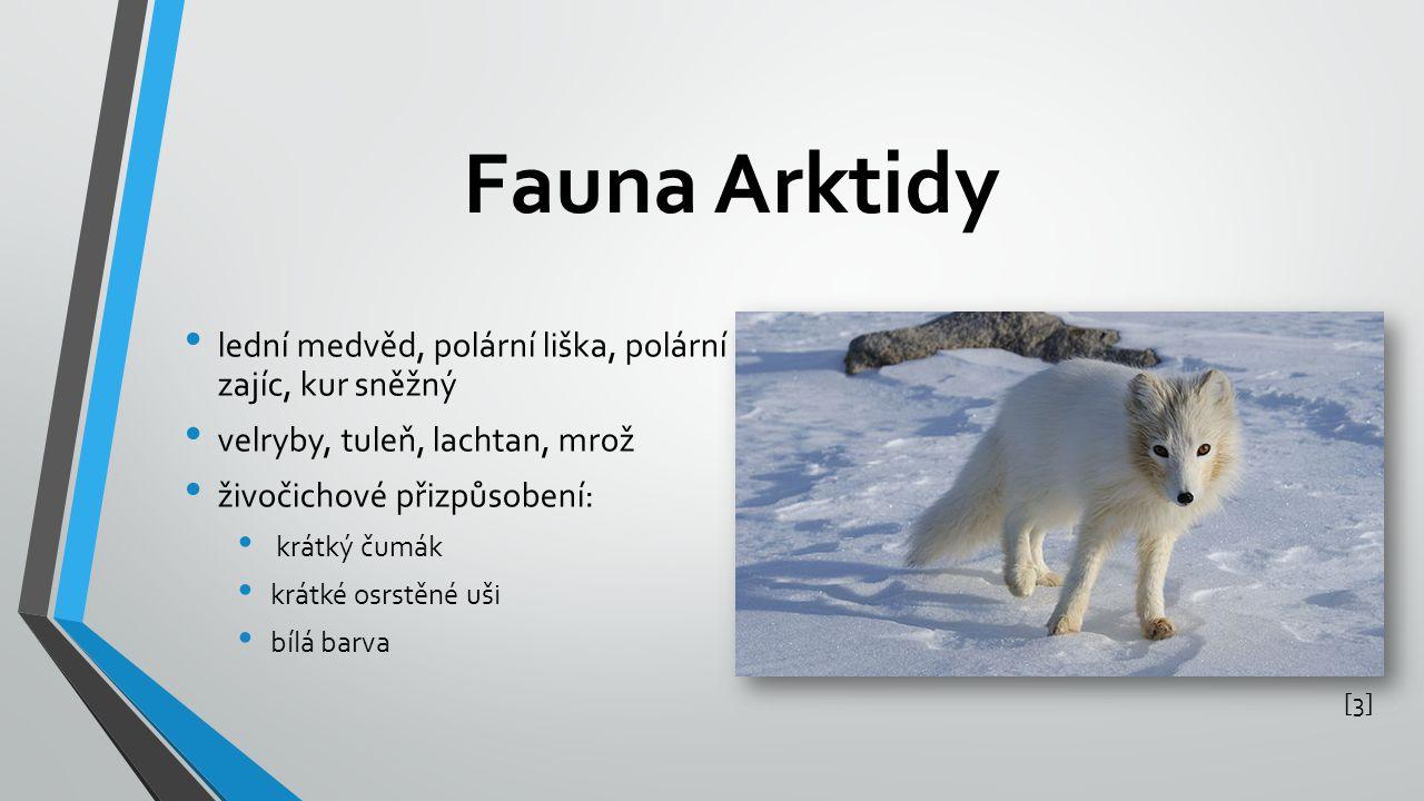 Fauna Arktidy lední medvěd, polární liška, polární zajíc, kur sněžný