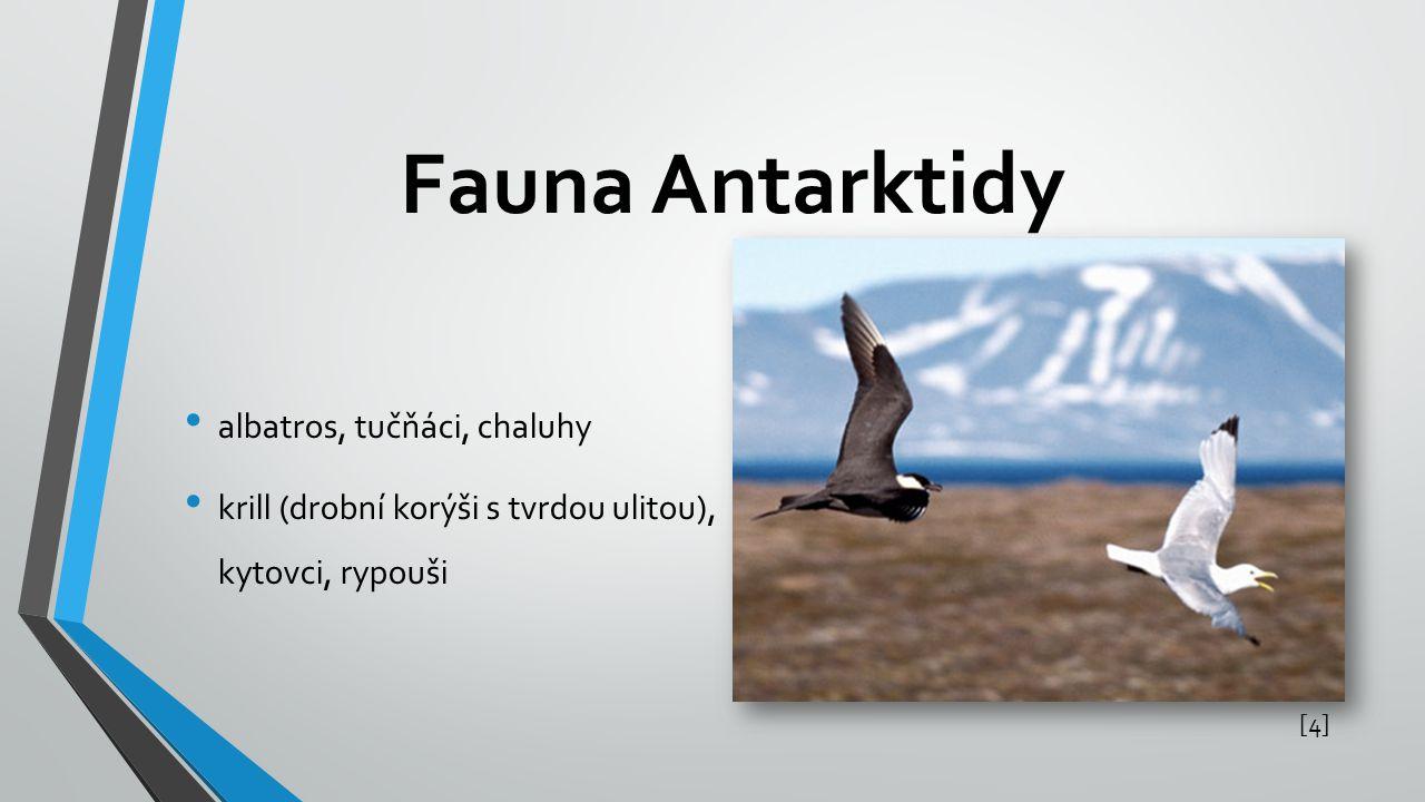 Fauna Antarktidy albatros, tučňáci, chaluhy