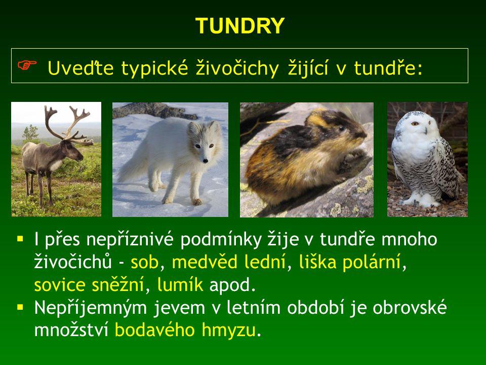 Uveďte typické živočichy žijící v tundře: