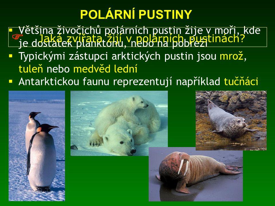  Jaká zvířata žijí v polárních pustinách