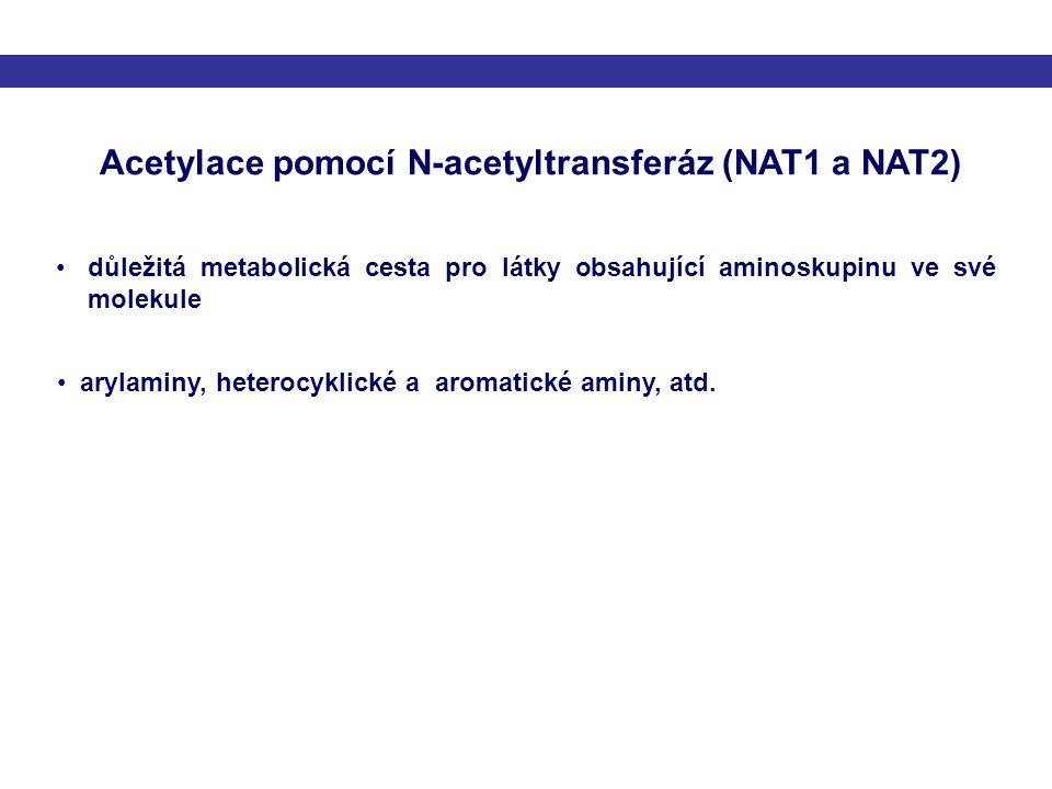 Acetylace pomocí N-acetyltransferáz (NAT1 a NAT2)
