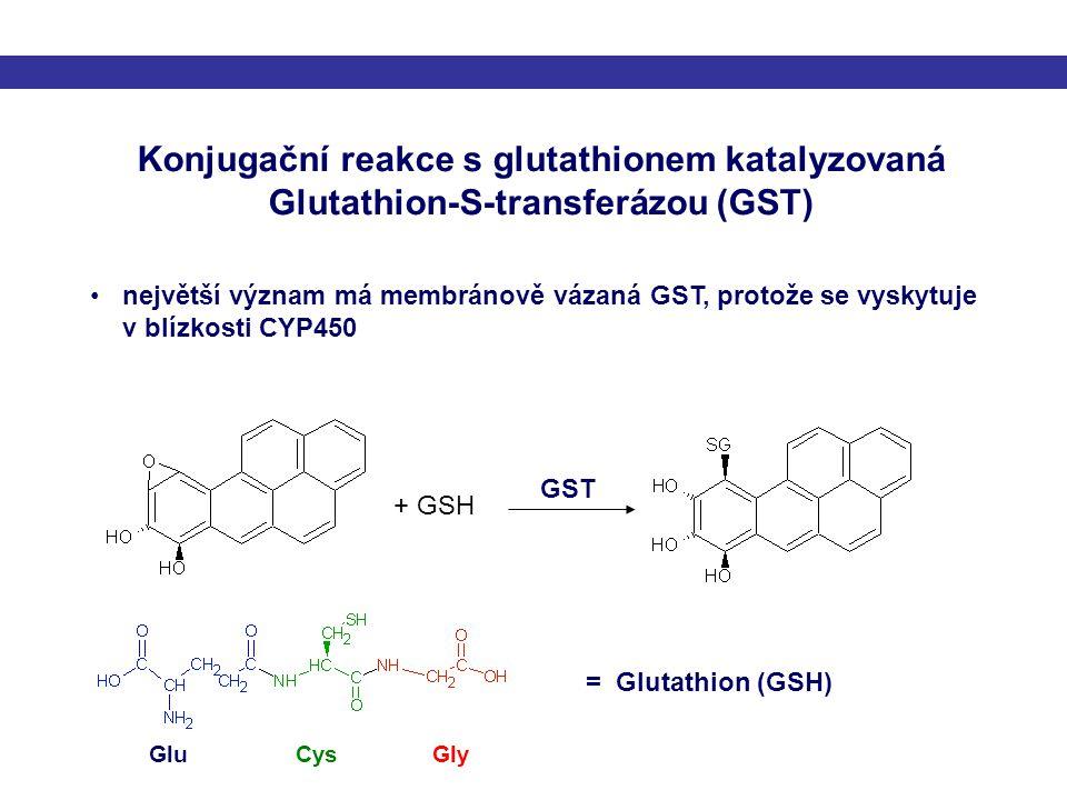 Konjugační reakce s glutathionem katalyzovaná Glutathion-S-transferázou (GST)