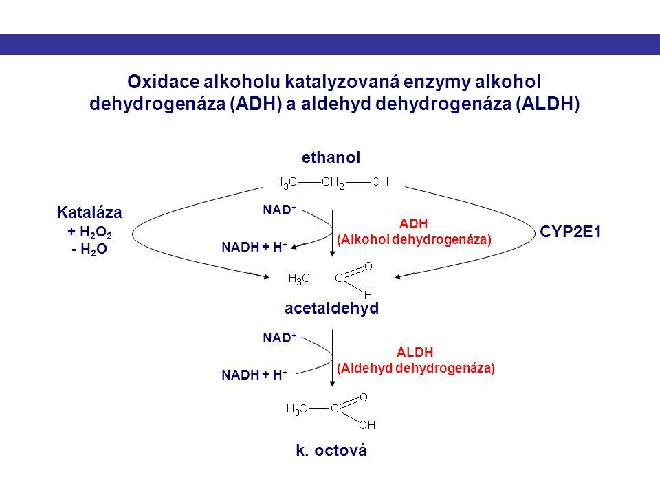 (Alkohol dehydrogenáza) (Aldehyd dehydrogenáza)