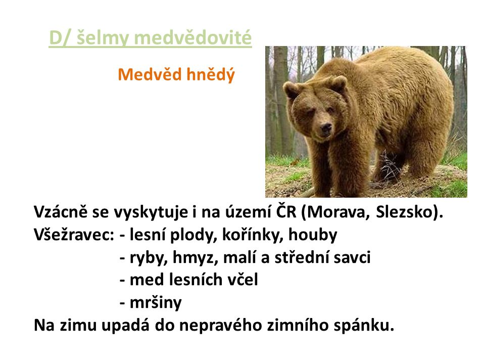 D/ šelmy medvědovité Medvěd hnědý
