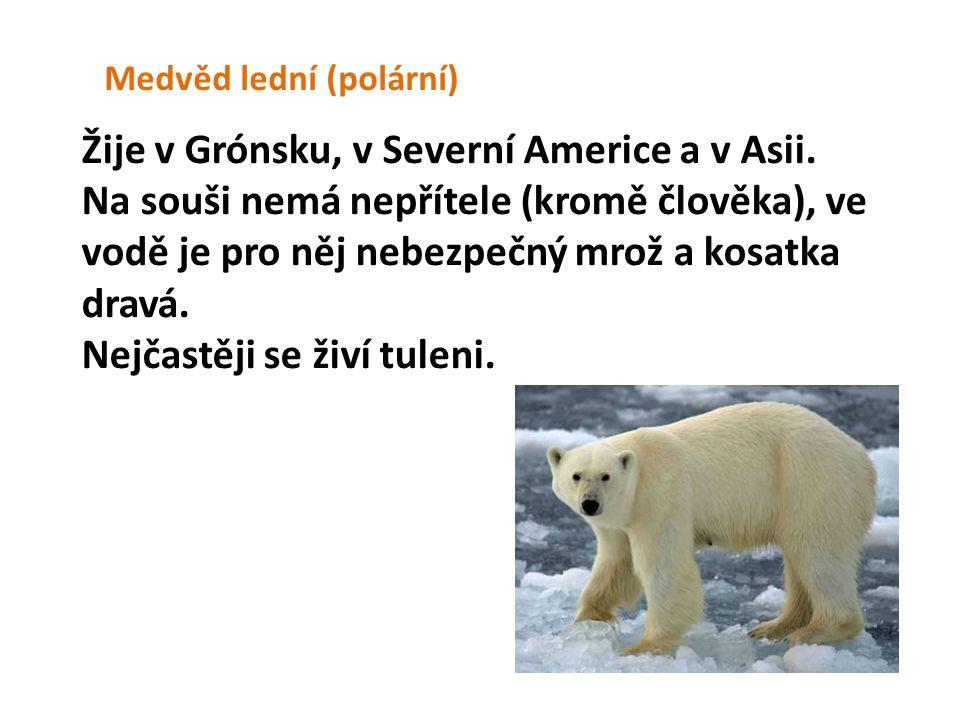 Žije v Grónsku, v Severní Americe a v Asii.