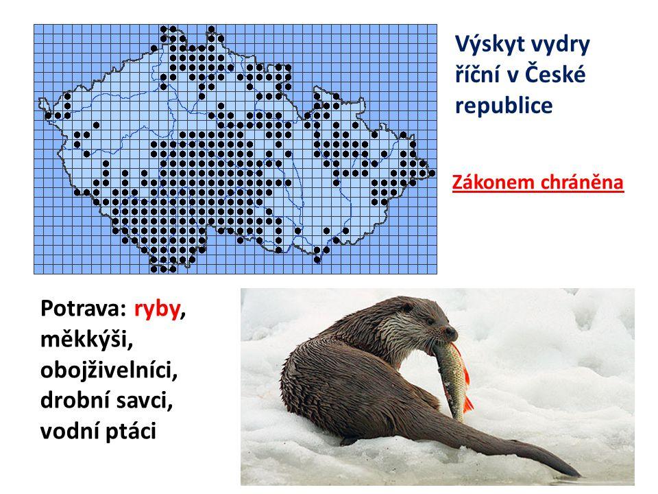 Výskyt vydry říční v České republice