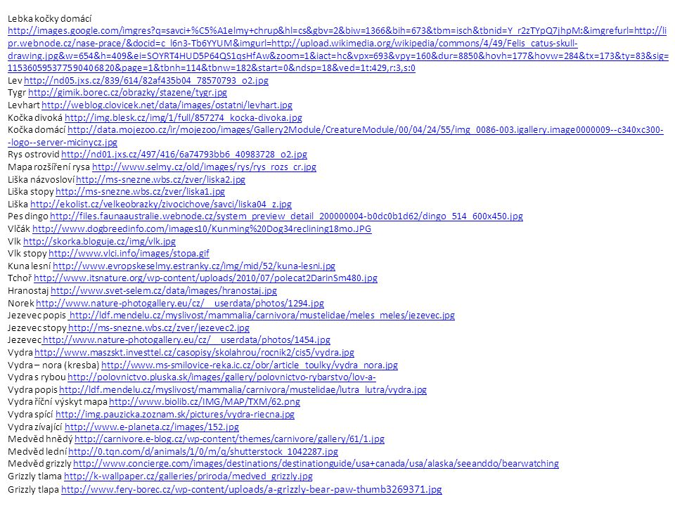 Lebka kočky domácí http://images. google. com/imgres