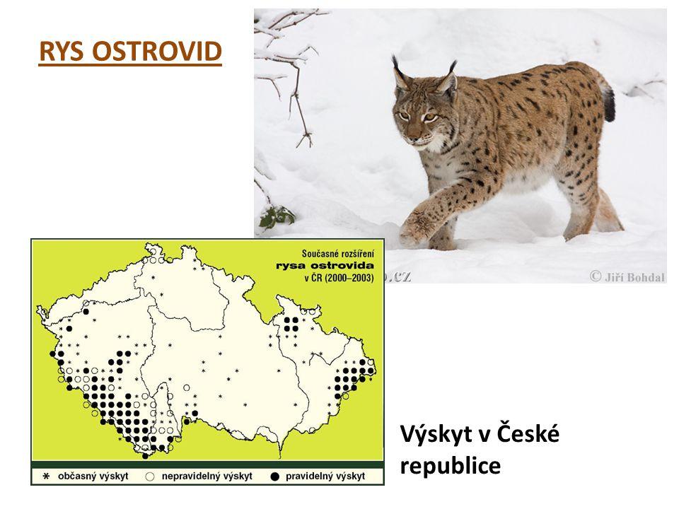 RYS OSTROVID Výskyt v České republice