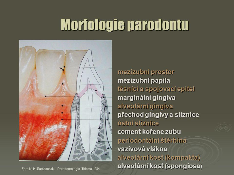 Morfologie parodontu mezizubní prostor mezizubní papila