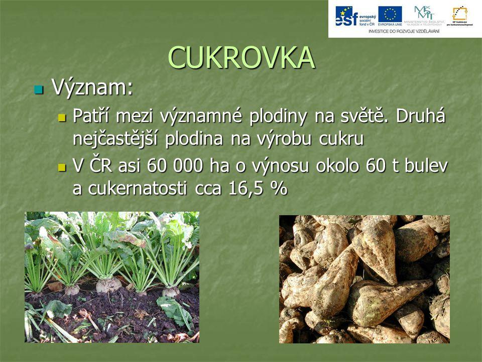 CUKROVKA Význam: Patří mezi významné plodiny na světě. Druhá nejčastější plodina na výrobu cukru.
