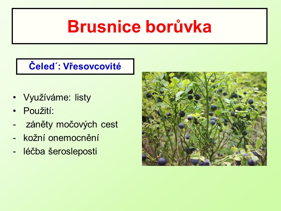 Brusnice borůvka Čeled´: Vřesovcovité Využíváme: listy Použití: