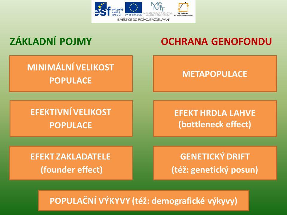 Základní pojmy Ochrana genofondu MINIMÁLNÍ VELIKOST POPULACE