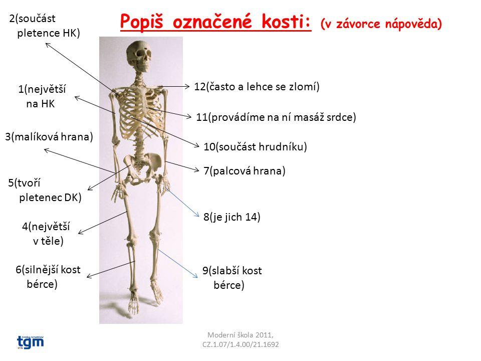 Popiš označené kosti: (v závorce nápověda)