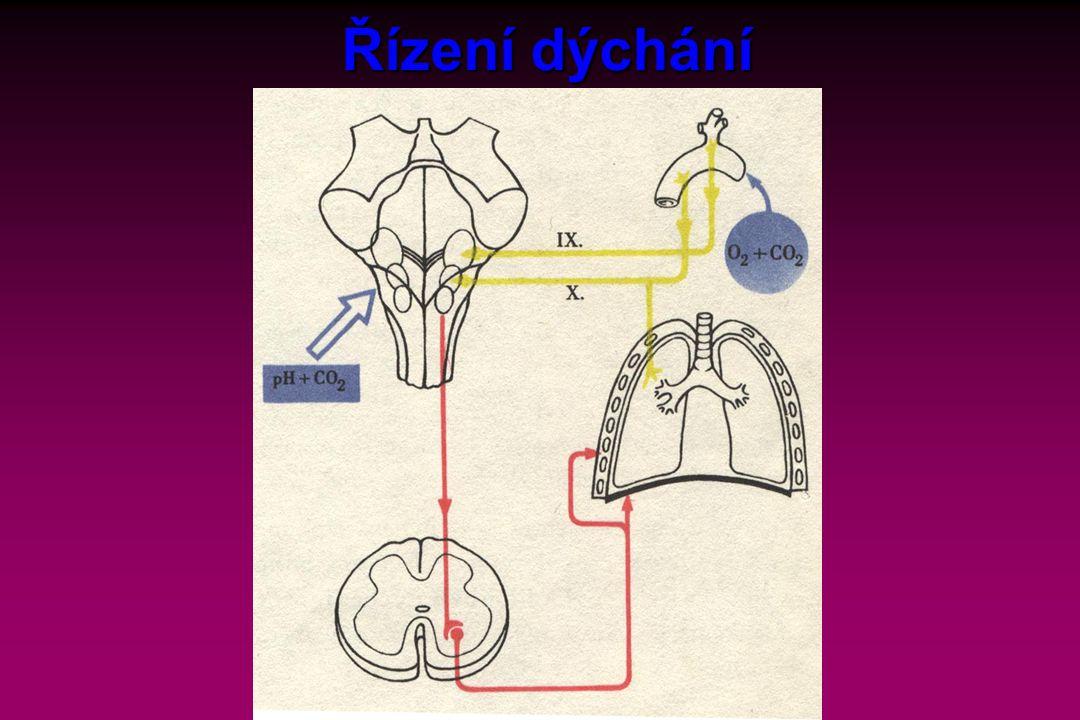 Řízení dýchání Text: Reprodukce nálevníků