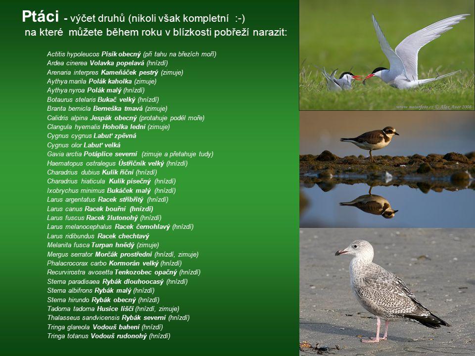 Ptáci - výčet druhů (nikoli však kompletní :-) na které můžete během roku v blízkosti pobřeží narazit: