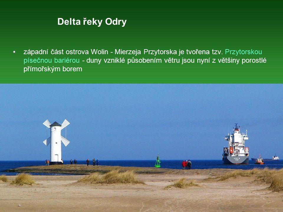 Delta řeky Odry