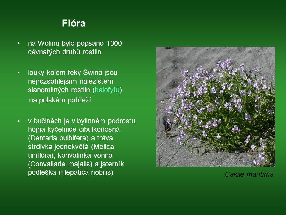 Flóra na Wolinu bylo popsáno 1300 cévnatých druhů rostlin