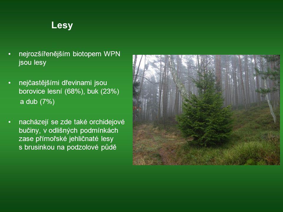 Lesy nejrozšířenějším biotopem WPN jsou lesy