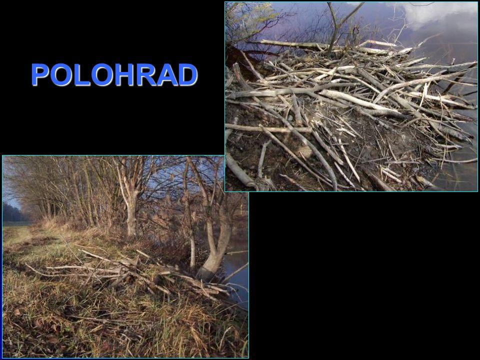 POLOHRAD