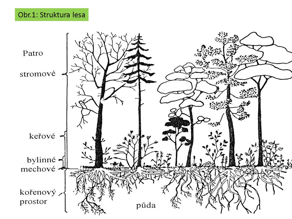 Obr.1: Struktura lesa