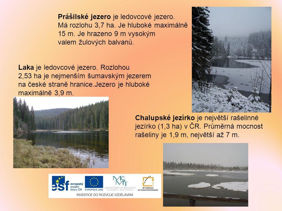 Prášilské jezero je ledovcové jezero.