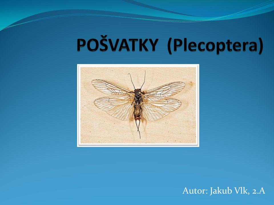 POŠVATKY (Plecoptera)