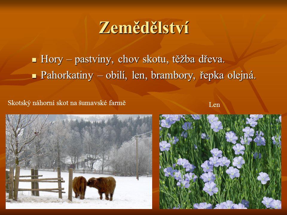 Zemědělství Hory – pastviny, chov skotu, těžba dřeva.