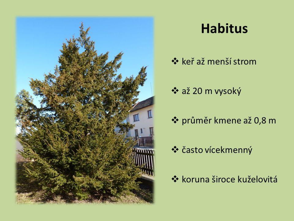 Habitus keř až menší strom až 20 m vysoký průměr kmene až 0,8 m